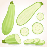 Set of vector zucchini in various forms. Royalty Free Stock Images