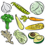 Set of vegetable, garlic, peas, cabbage. Vector illustration Royalty Free Stock Photo