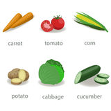 Set of vegetable on white background. Carrots, cucumber, cabbage, corn tomato potatoes vector illustration