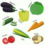 Set of vegetable on white background. Vector illustration Stock Image