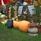 Set Vegetables Stock Photography