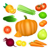 Set of vegetables and citrus fruits. Vector illustration Stock Image