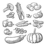 Set vegetables. Cucumbers, Garlic, Corn, Pepper, Broccoli, Potato and Tomato. Set vegetables. Cucumbers, Garlic, Corn, Pepper, Broccoli, Potato, Carrot, Onion Royalty Free Stock Image