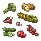 Set vegetables. Cucumbers, Garlic, Corn, Pepper, Broccoli, Potato and Tomato. Stock Image