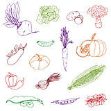 Set of vegetables of different colors, hand-drawn on an isolated white backgroun. D, corn, pumpkin, carrots, cucumber, onions, kvasol, peas, tomatoes, sininkie Stock Image