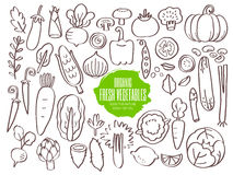 Set of vegetables doodles Royalty Free Stock Photos