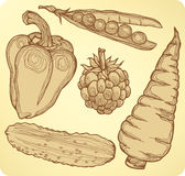 Set vegetables, fruits and berries, hand-drawing. Stock Images