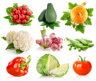 Set vegetables with green leaves Stock Image