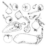 Set of vegetables hand-drawn. Set of hand drawn vegetables Stock Photo