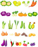Set of vegetables. Illustration of isolated set of vegetables on white vector illustration