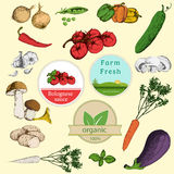 Set of vegetables and labels Royalty Free Stock Photography