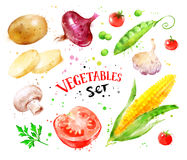 Set of vegetables with paint splashes. Stock Photos