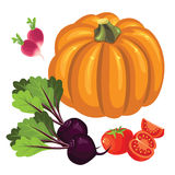 Set of vegetables. Tomato and slice tomato, radishes, pumpkin and beetroot Stock Photos