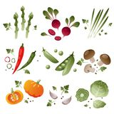 Set of vegetables on white background Royalty Free Stock Images