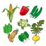 set vegetarian för mat Örtar och grönsaker royaltyfri illustrationer