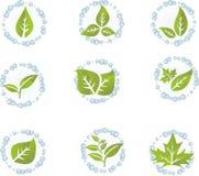 set vektor för grön leaf Arkivbild