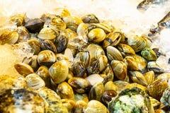 Set of venus shell Meretrix lyrata crushed ice freshness preservation marine delicacies fish asia tray background stock photos