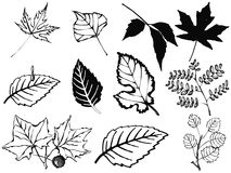 Set verschiedene Blätter Stockfotografie
