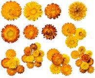 Set verschiedene Blumenblüten. Stockfoto