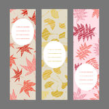 Set of vertical autumn banners. Harvest berry ornament. Vector Illustration. Set of vertical autumn banners. Leaf ornaments. Scratched ginkgo, momiji and Stock Photos