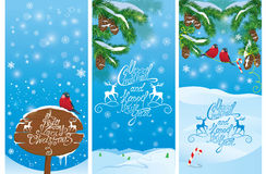Set of vertical banners with fir tree branches and bullfinch bir Stock Image