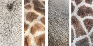 Set of vertical banners with texture of animal skin. Set of vertical nature banners with texture of animal skin - asian ox, elephant, giraffe Stock Photography