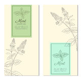 Set of vertical vintage banners, labels with sketch mint leaves, Designed vector frame with blossom peppermint and space. For text, line art, design for royalty free illustration