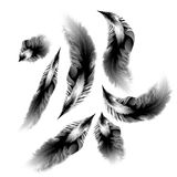Set of vetor black-white feathers Stock Photos