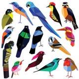 Set Vögel Lizenzfreies Stockfoto
