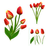 Set of vibrant polygonal tulips on white background. isolated. easy to modify. Vector illustration Royalty Free Stock Images