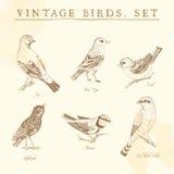 Set of vintage birds. Stock Photo