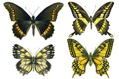 Set of vintage butterflies on a white background, watercolor illustration, hand drawing