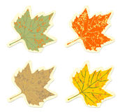 Set of vintage colorful maple leaves Royalty Free Stock Photo