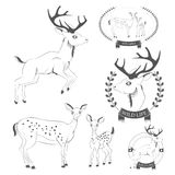 Set of vintage deer, emblems, labels, logo Stock Photos