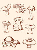 Set of vintage forest mushrooms royalty free stock photos