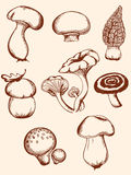 Set of vintage forest mushrooms Stock Images