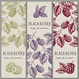 Set of vintage hand drawn blackberry raspberry vertical orientation banners. Royalty Free Stock Images