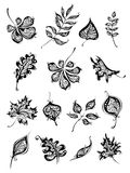 Set of vintage leaves. Hand-drawn ornate leaves for your design isolated on white background Royalty Free Stock Images