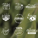 Set of vintage organic labels. Badges, icons, logos, design templates. Plants elements, leaves. Natural, organic, eco food. Vector signs on blurred green Stock Image