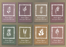 Set Vintage Posters with hand drawn ink herbs Royalty Free Stock Photos