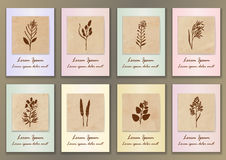 Set Vintage Posters with hand drawn ink herbs Stock Photos