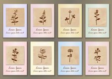 Set Vintage Posters with hand drawn ink herbs Stock Images