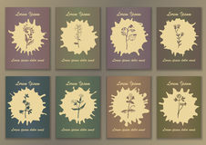 Set Vintage Posters with hand drawn ink herbs Royalty Free Stock Images