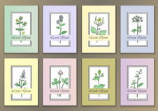 Set Vintage Posters with hand drawn watercolor herbs Royalty Free Stock Photo