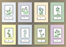 Set Vintage Posters with hand drawn watercolor herbs Stock Photos