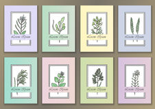 Set Vintage Posters with hand drawn watercolour herbs Royalty Free Stock Photo
