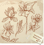 Set of Vintage Realistic graphic flowers - hand dr Stock Photos