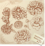 Set of Vintage Realistic graphic flowers - hand dr Stock Photography