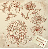 Set of Vintage Realistic graphic flowers - hand dr Stock Photo