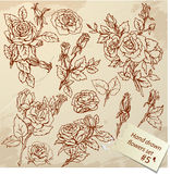 Set of Vintage Realistic graphic flowers - roses Stock Photography